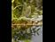 Bild 1 Garten- und Landschaftsbau K�nig U. in Ratingen