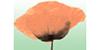 Kundenlogo von Blumen Haas ... und Gärtnerei Stückle