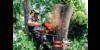 Kundenlogo von Baumpflege Kleine-Benne