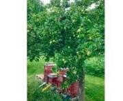 Bunt drucken und grün denken: Bienen und Solarenergie haben bei Mank einen festen Platz