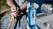BOMBAY SAPPHIRE® on a Mission to be World's Most Sustainable Gin