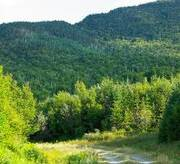 Domtar Commits to Pursuing Forest Stewardship Council® Certification of Wabigoon, ...
