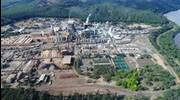 CENIBRA sets annual pulp production record
