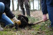 bvdm climate initiative offers forest afforestation in Germany