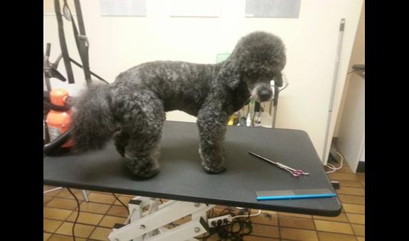 Hundesalon Fell und Pfote