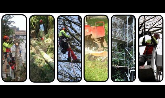 Baumpflege ROH