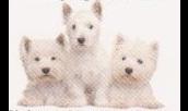 Rita´s Hundesalon