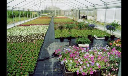 Büchner Gärtnerei und Blumengeschäft