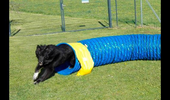 Hundeschule Vademecum Canis