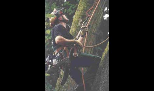 Baumpflege Braun