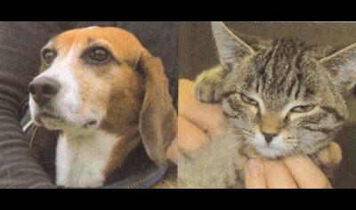 Die Tierischen - Großtierpraxis