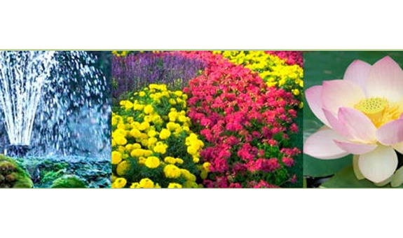 Busch Flora & Aqua