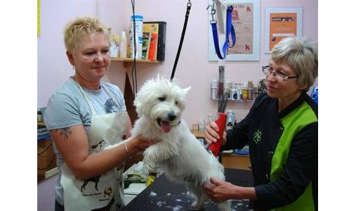 Hundesalon Peter