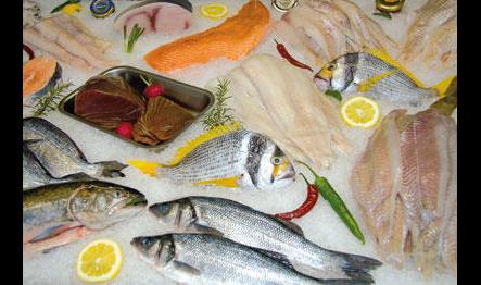 Fangfisch Bouda
