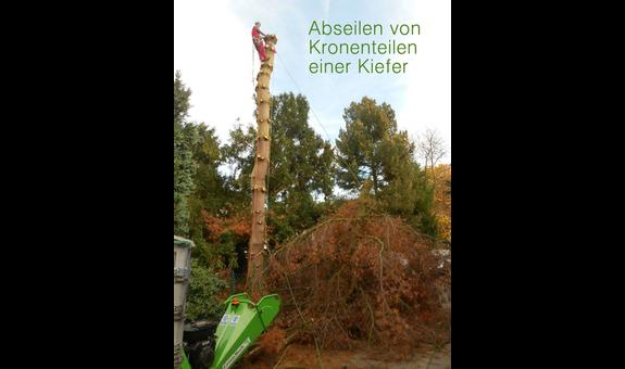 Lang Baum & Garten