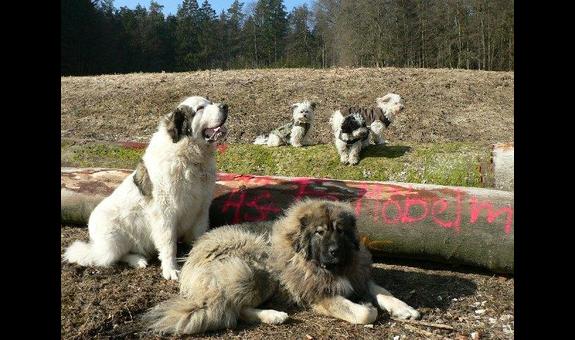 Hundeschule -Frankenalb-