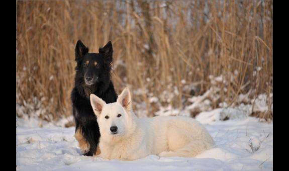 Hundeschule Stein & Hundezucht