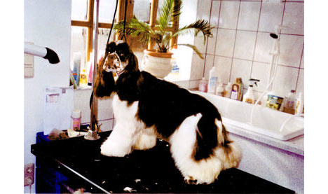 Hundepflege Studio Henny Lindner