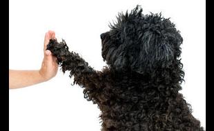 Hundeschule von der Mülbe