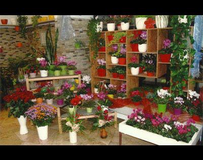 Kundenbild klein 2 Blumen Rutz Gärtnerei