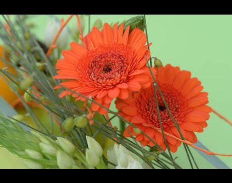 Kundenbild klein 4 Berchtenbreiter GmbH Friedhofsgärtnerei und Blumen