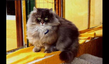 Emmas Katzenparadies
