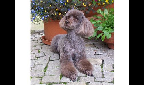 Conny's Hundesalon Constanze Strzysch