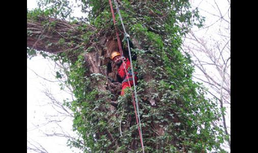 Deppner Baumpflege und Höhenarbeiten