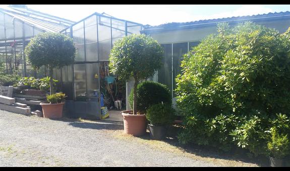 Herzog Gartenbaubetrieb