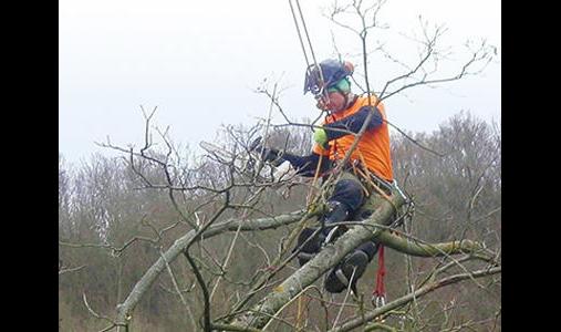 Der Baumdienst Inh. Dirk Büttner