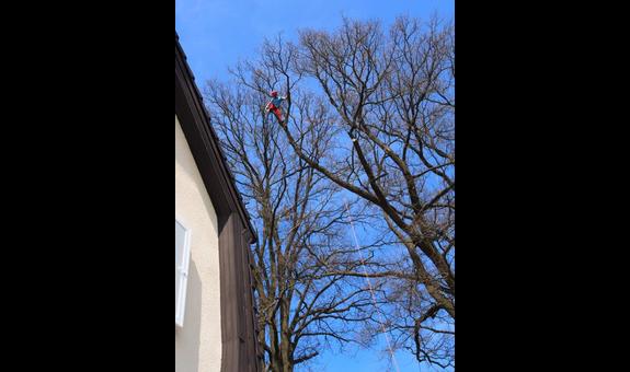 Baumpflege Lachmann