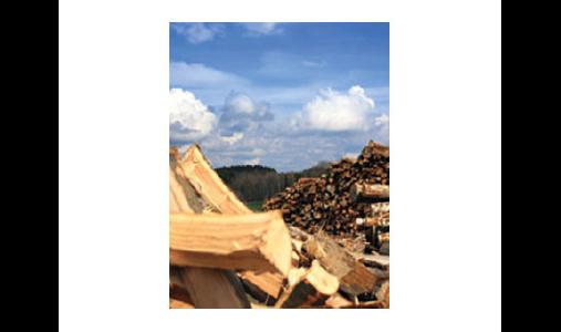 Holzeinschlag/Holzhandel Dominic Lein