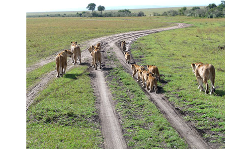 NOVA TOURS & SAFARIS