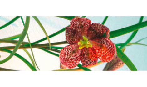 Daniela`s Blütenideen