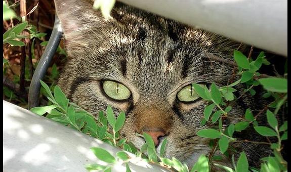 Matzen Tina, Tierarztpraxis