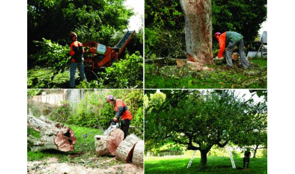 Baumpflegeteam Bodensee Herr Pietruschinski