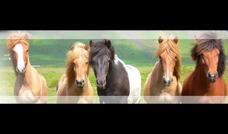 Steiff Hagar, Dr.met.vet., Fachtierärztin für Pferde