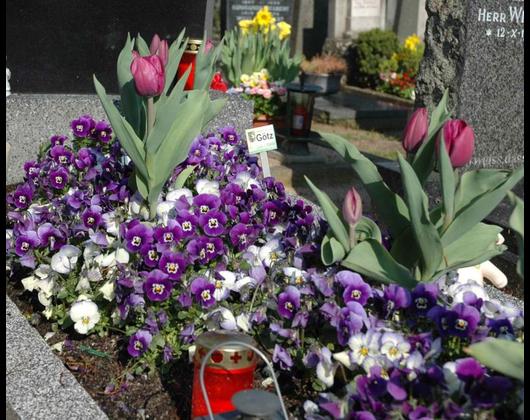 Kundenbild klein 7 Friedhofsgärtnerei Götz GmbH