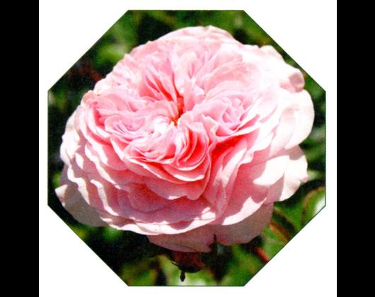 Kundenbild klein 10 Gartenbau Gartenwelt Kröner