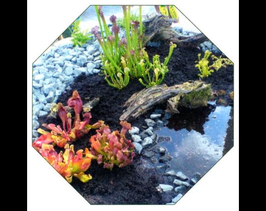 Kundenbild klein 6 Garten Kröner
