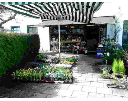 Kundenbild groß 1 Blumenstüberl