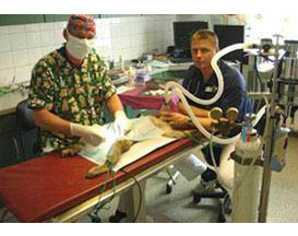 Kundenbild klein 1 Tierklinik Dr. Bodo Kröll & Kollegen