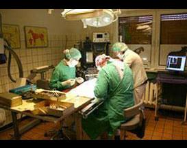 Kundenbild klein 2 Tierklinik Dr. Bodo Kröll & Kollegen