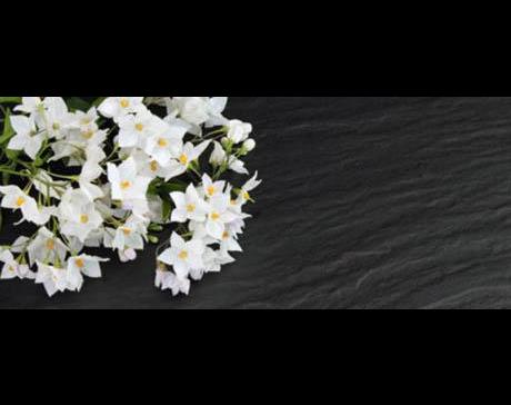 Kundenbild klein 3 Bestattungen Zirngibl