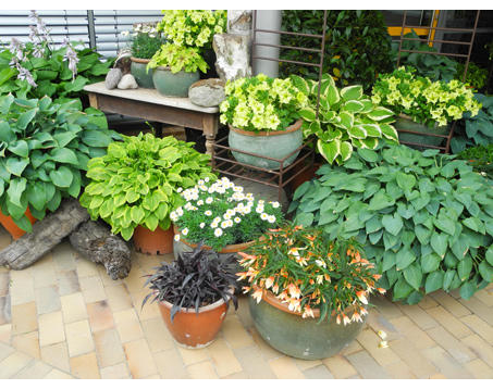 Kundenbild klein 8 Schneider Garten Baumschule