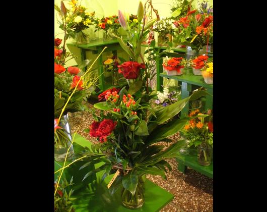 Kundenbild klein 4 Pflanzenmarkt Bohnsdorf