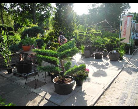 Kundenbild klein 9 Schneider Garten Baumschule