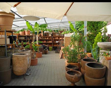 Kundenbild klein 10 Schneider Garten Baumschule