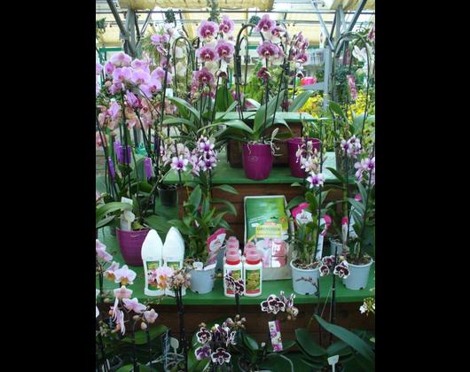 Kundenbild klein 7 Pflanzenmarkt Bohnsdorf