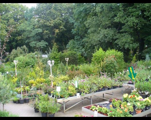 Kundenbild klein 8 Pflanzenmarkt Bohnsdorf
